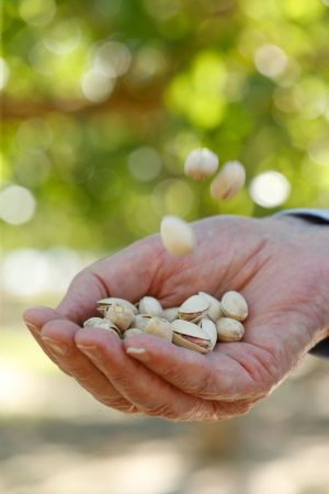 Jensen - a Pioneer, a Professor and Pistachios