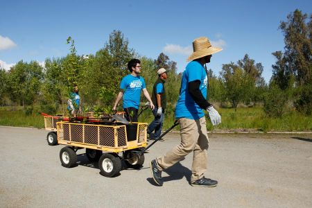 Wagons For Gardening