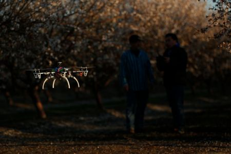 drone in the orchard
