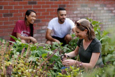 Student-cupboard-garden05