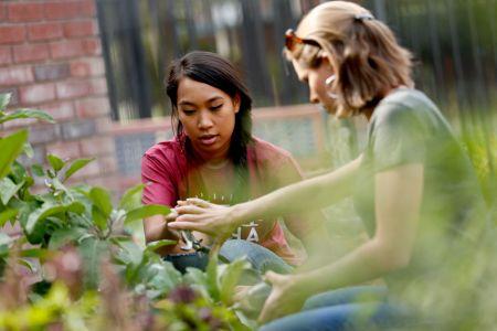 Student-cupboard-garden08