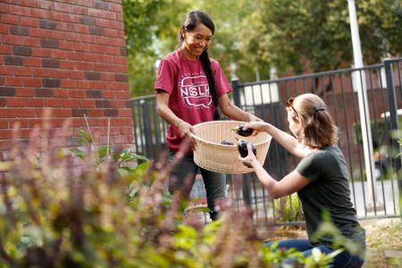 Student-cupboard-garden09