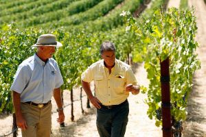 Winemakers