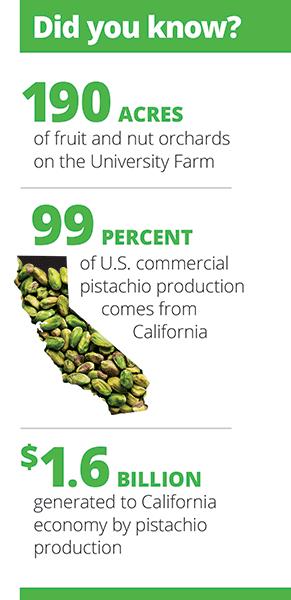 Infographic pistachios