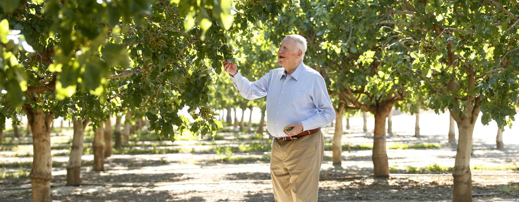 Jensen with pistachio trees