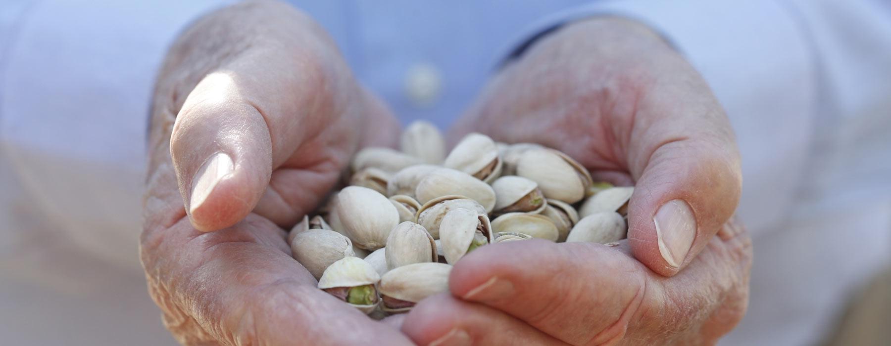 pistachios in hands
