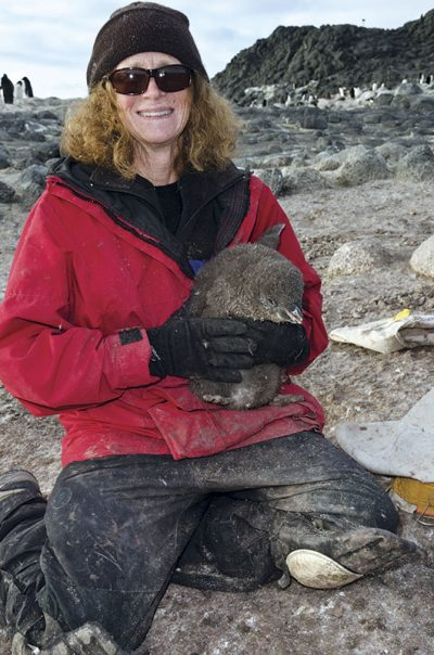 penny cook with penguin